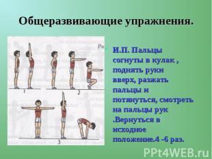 Общеразвивающие упражнения. И.П. Пальцы согнуты в кулак , поднять руки вверх, ра