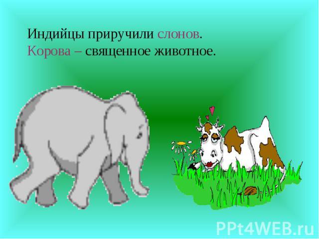 Индийцы приручили слонов.Корова – священное животное.