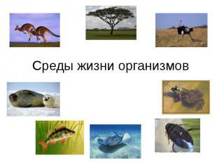 Среды жизни организмов