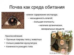 Почва как среда обитания - низкое содержание кислорода; - насыщенность влагой; -
