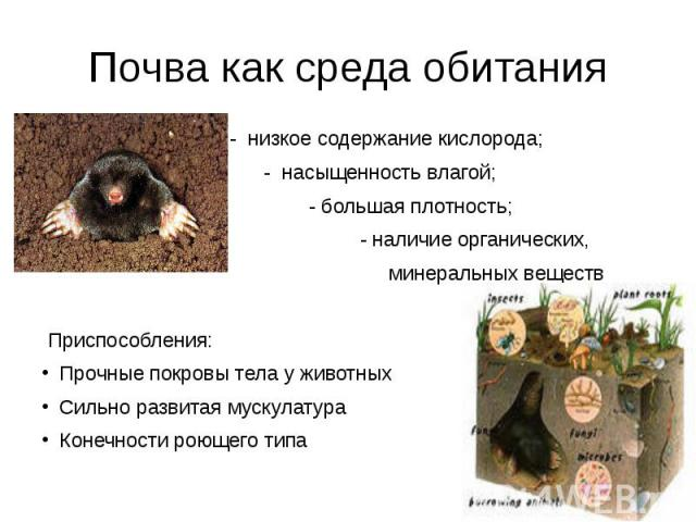 Почва как среда обитания - низкое содержание кислорода; - насыщенность влагой; - большая плотность; - наличие органических, минеральных веществ Приспособления: Прочные покровы тела у животныхСильно развитая мускулатура Конечности роющего типа