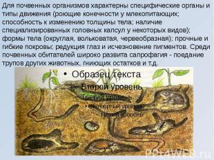 Для почвенных организмов характерны специфические органы и типы движения (роющие