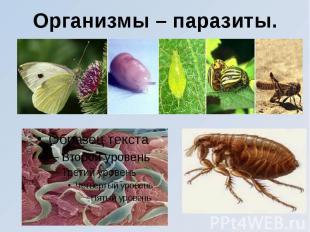 Организмы – паразиты.