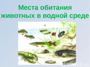 Места обитания животных в водной среде .