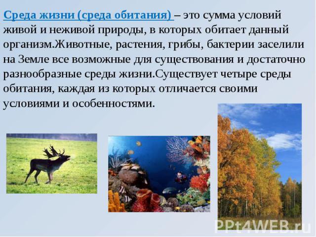 Среда жизни (среда обитания) – это сумма условий живой и неживой природы, в которых обитает данный организм.Животные, растения, грибы, бактерии заселили на Земле все возможные для существования и достаточно разнообразные среды жизни.Существует четыр…