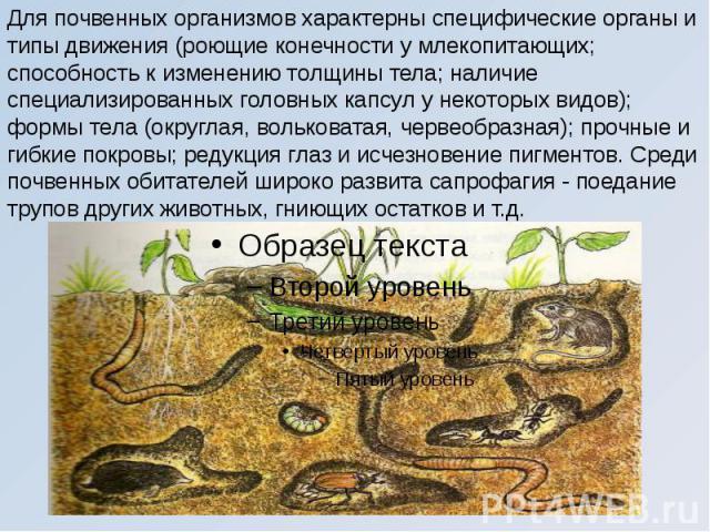 Для почвенных организмов характерны специфические органы и типы движения (роющие конечности у млекопитающих; способность к изменению толщины тела; наличие специализированных головных капсул у некоторых видов); формы тела (округлая, вольковатая, черв…