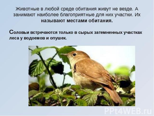 Животные в любой среде обитания живут не везде. А занимают наиболее благоприятные для них участки. Их называют местами обитания. Соловьи встречаются только в сырых затемненных участках леса у водоемов и опушек.