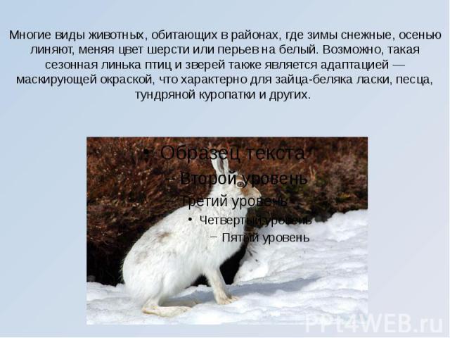 Многие виды животных, обитающих в районах, где зимы снежные, осенью линяют, меняя цвет шерсти или перьев на белый. Возможно, такая сезонная линька птиц и зверей также является адаптацией — маскирующей окраской, что характерно для зайца-беляка ласки,…