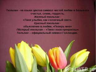 Тюльпан - на языке цветов символ чистой любви и большого счастья, слава, гордост