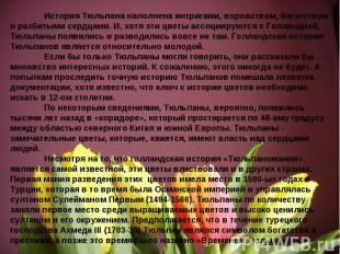 История Тюльпана наполнена интригами, воровством, богатством и разбитыми сердцам