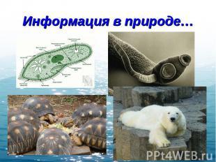 Информация в природе…