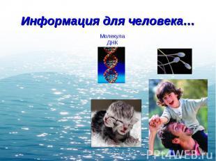 Информация для человека… Молекула ДНК