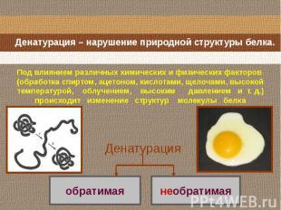 Денатурация – нарушение природной структуры белка. Под влиянием различных химиче