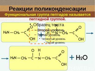 Реакции поликонденсации Функциональная группа пептидов называется пептидной груп
