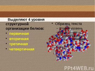 Выделяют 4 уровня структурной организации белков:первичнаявторичнаятретичнаячетв