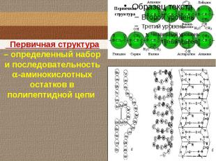 Первичная структура – определенный набор и последовательность -аминокислотныхост