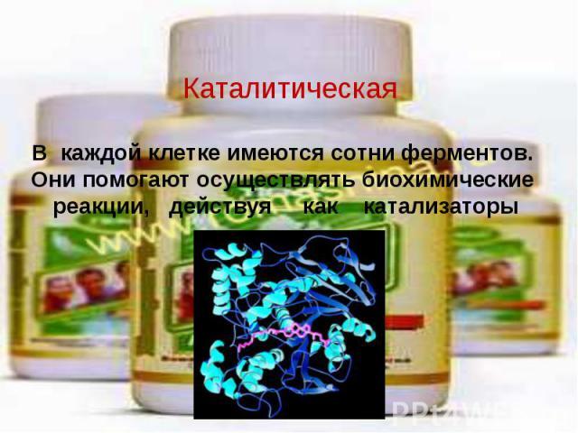 Каталитическая В каждой клетке имеются сотни ферментов. Они помогают осуществлять биохимические реакции, действуя как катализаторы