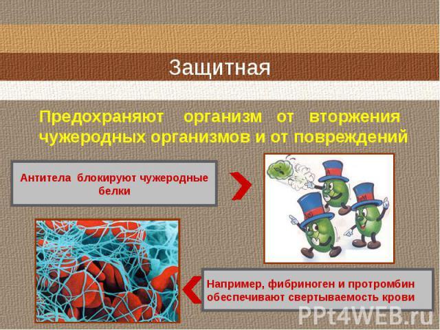 Защитная Предохраняют организм от вторжениячужеродных организмов и от повреждений Антитела блокируют чужеродныебелки Например, фибриноген и протромбинобеспечивают свертываемость крови