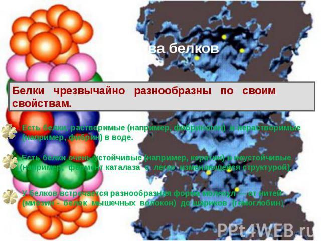 Свойства белков Белки чрезвычайно разнообразны по своим свойствам. Есть белки, растворимые (например, фибриноген) и нерастворимые (например, фибрин) в воде. Есть белки очень устойчивые (например, кератин) и неустойчивые (например, фермент каталаза с…