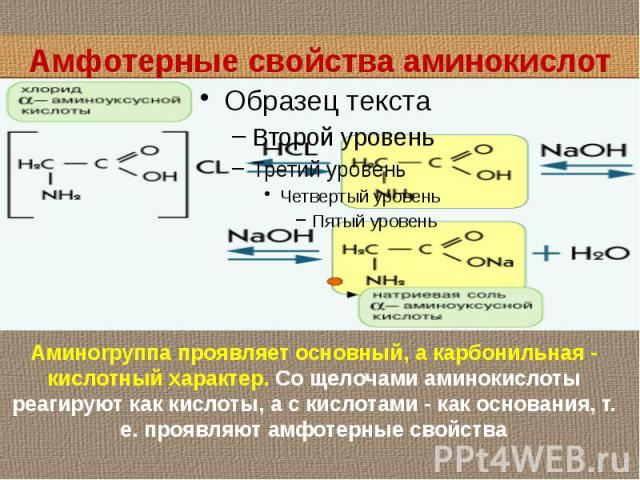 Амфотерные свойства аминокислот Аминоrpyппa проявляет основный, а карбонильная - кислотный характер. Со щелочами аминокислоты реагируют как кислоты, а с кислотами - как основания, т. е. проявляют амфотерные свойства