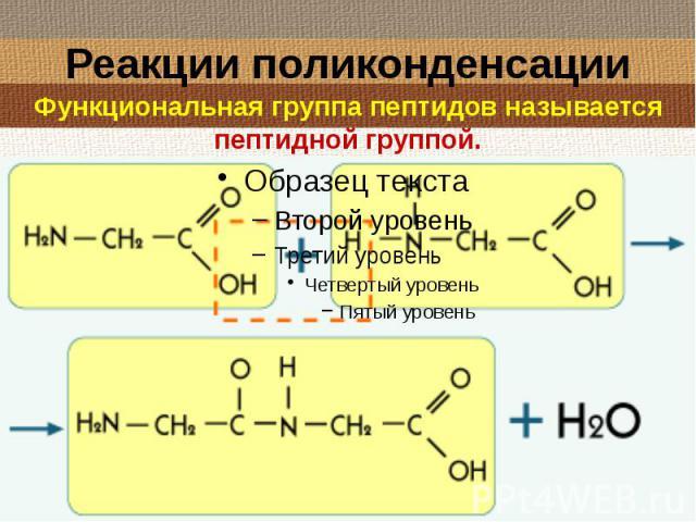 Реакции поликонденсации Функциональная группа пептидов называется пептидной группой.