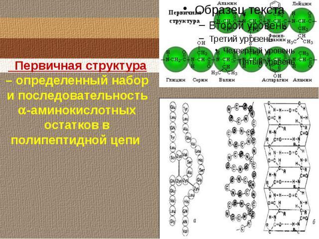 Первичная структура – определенный набор и последовательность -аминокислотныхостатков в полипептидной цепи