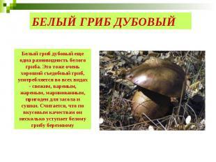 БЕЛЫЙ ГРИБ ДУБОВЫЙ Белый гриб дубовый еще одна разновидность белого гриба. Это т