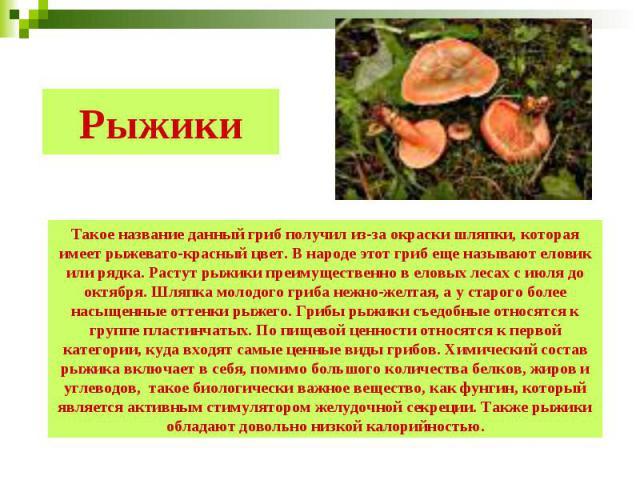 Рыжики Такое название данный гриб получил из-за окраски шляпки, которая имеет рыжевато-красный цвет. В народе этот гриб еще называют еловик или рядка. Растут рыжики преимущественно в еловых лесах с июля до октября. Шляпка молодого гриба нежно-желтая…