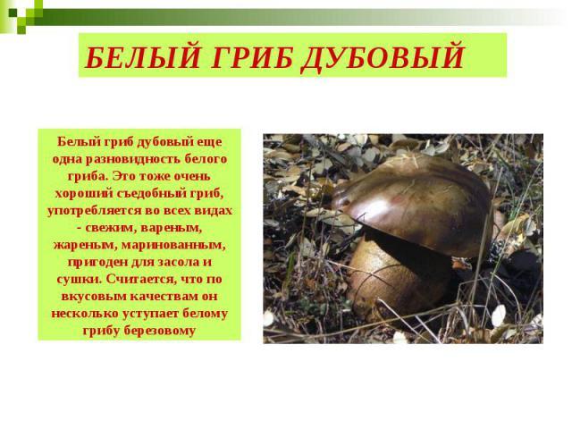 БЕЛЫЙ ГРИБ ДУБОВЫЙ Белый гриб дубовый еще одна разновидность белого гриба. Это тоже очень хороший съедобный гриб, употребляется во всех видах - свежим, вареным, жареным, маринованным, пригоден для засола и сушки. Считается, что по вкусовым качествам…