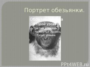 Портрет обезьянки.