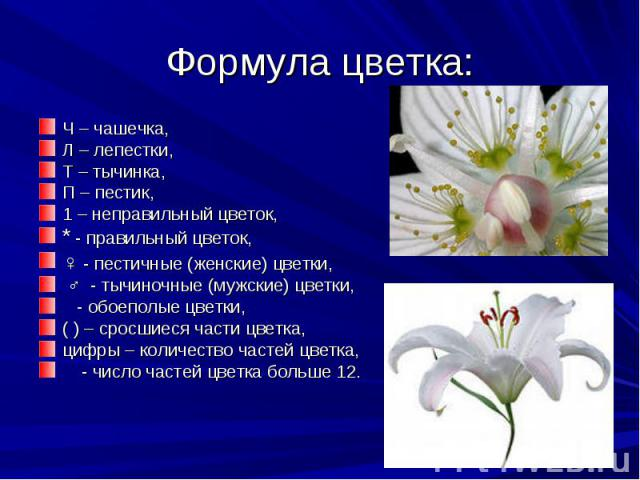 Формула цветка: Ч – чашечка,Л – лепестки,Т – тычинка,П – пестик,1 – неправильный цветок,* - правильный цветок,♀- пестичные (женские) цветки,♂ - тычиночные (мужские) цветки, - обоеполые цветки,( ) – сросшиеся части цветка,цифры – количество част…