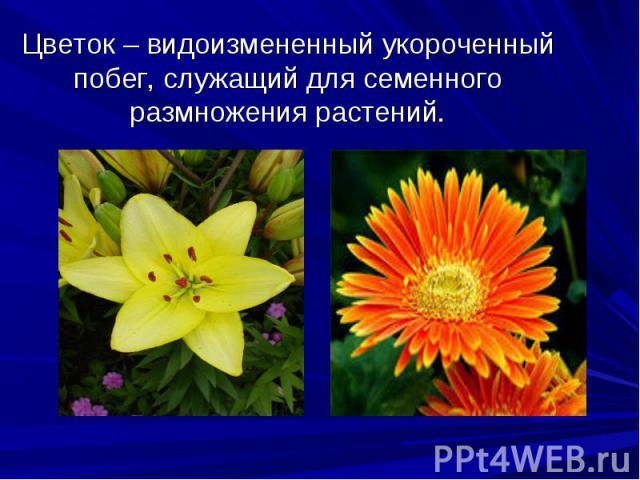 Цветок– видоизмененный укороченный побег, служащий для семенного размножения растений.