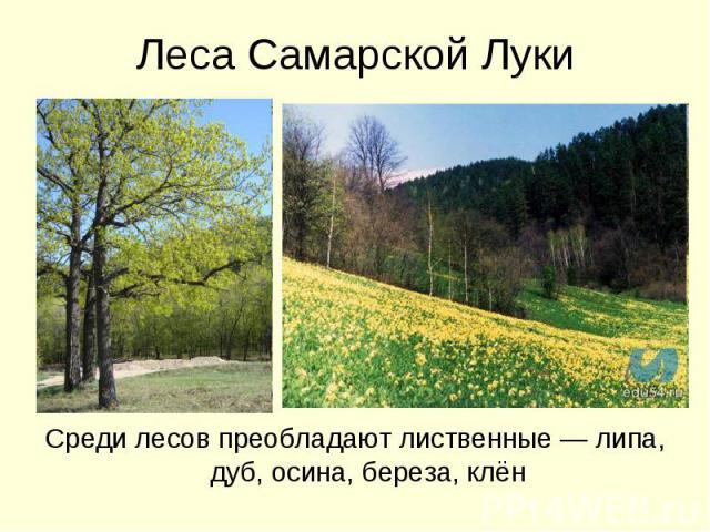 Леса Самарской ЛукиСреди лесов преобладают лиственные — липа, дуб, осина, береза, клён