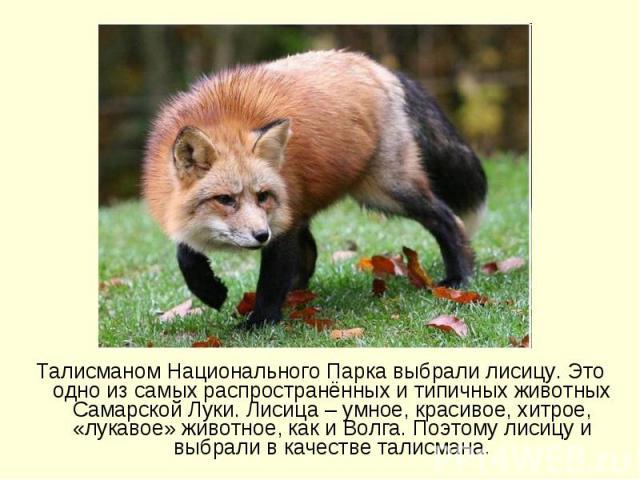 Талисманом Национального Парка выбрали лисицу. Это одно из самых распространённых и типичных животных Самарской Луки. Лисица – умное, красивое, хитрое, «лукавое» животное, как и Волга. Поэтому лисицу и выбрали в качестве талисмана.