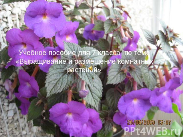 Учебное пособие для 7 класса по теме «Выращивание и размещение комнатных растений»