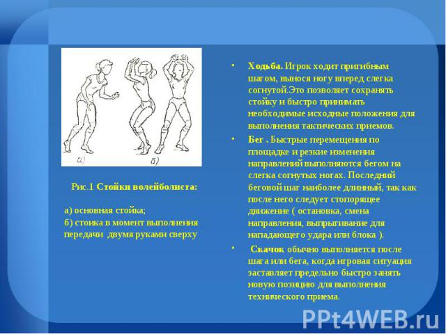 Рис.1 Стойки волейболиста: а) основная стойка; б) стоика в момент выполнения передачи двумя руками сверху Ходьба. Игрок ходит пригибным шагом, вынося ногу вперед слегка согнутой.Это позволяет сохранять стойку и быстро принимать необходимые исходные …