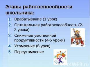 Этапы работоспособности школьника: Врабатывание (1 урок)Оптимальная работоспособ