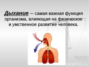 Дыхание – самая важная функция организма, влияющая на физическое и умственное ра