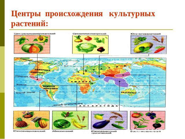 Центры происхождения культурных растений: