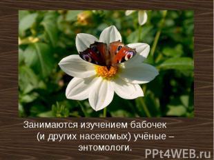 Занимаются изучением бабочек (и других насекомых) учёные –энтомологи.
