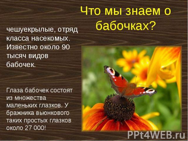 Что мы знаем о бабочках? чешуекрылые, отряд класса насекомых. Известно около 90 тысяч видов бабочек. Глаза бабочек состоят из множества маленьких глазков. У бражника вьюнкового таких простых глазков около 27000!