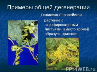 Примеры общей дегенерацииПовилика Европейская растение с атрофированными листьям