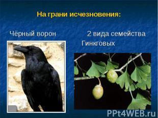 На грани исчезновения:На грани исчезновения:Чёрный ворон 2 вида семейства Гинкго