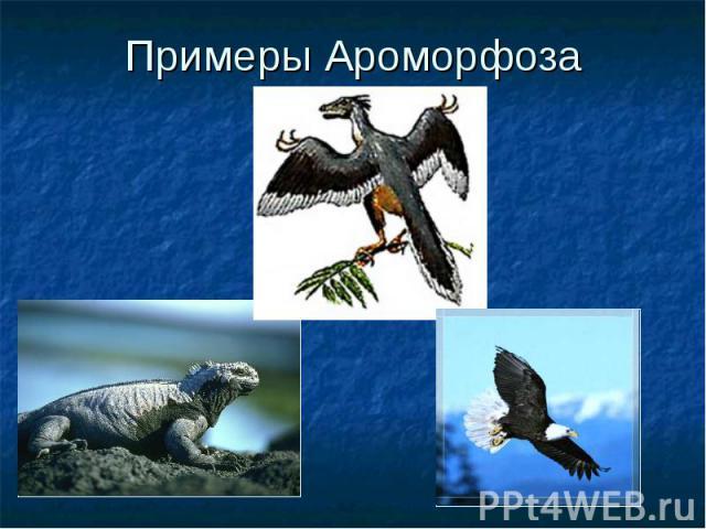 Примеры Ароморфоза