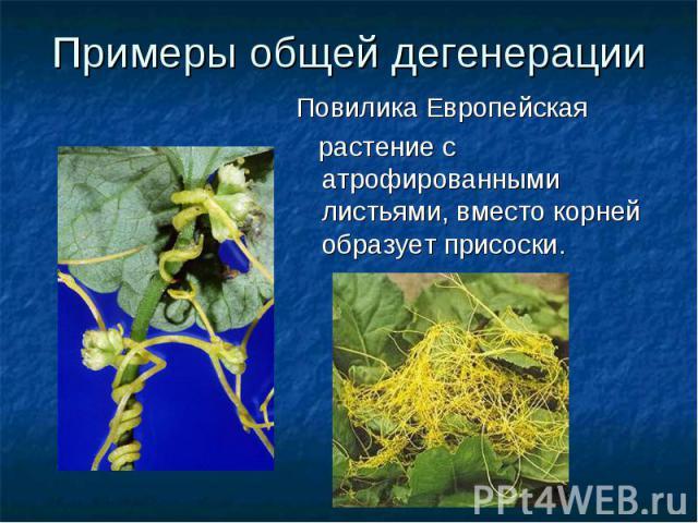 Примеры общей дегенерацииПовилика Европейская растение с атрофированными листьями, вместо корней образует присоски.