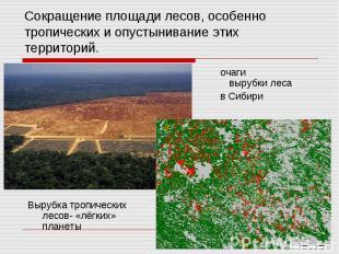 Сокращение площади лесов, особенно тропических и опустынивание этих территорий.