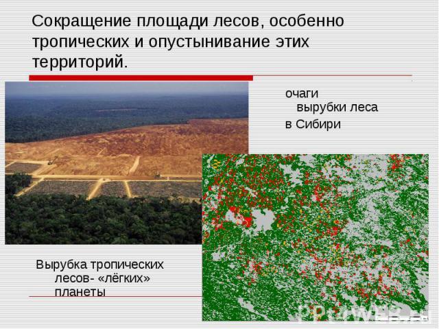 Сокращение площади лесов, особенно тропических и опустынивание этих территорий. очаги вырубки леса в Сибири Вырубка тропических лесов- «лёгких» планеты