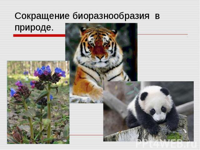 Сокращение биоразнообразия в природе.