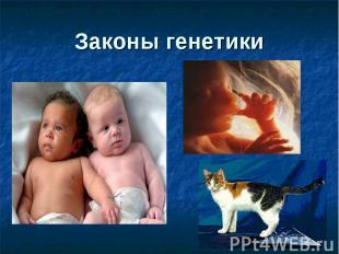 Законы генетики