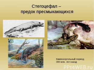 Стегоцефал – предок пресмыкающихся Каменноугольный период300 млн. лет назад